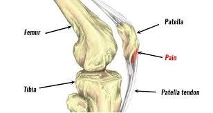 knoglerne i benet der viser springerknæ